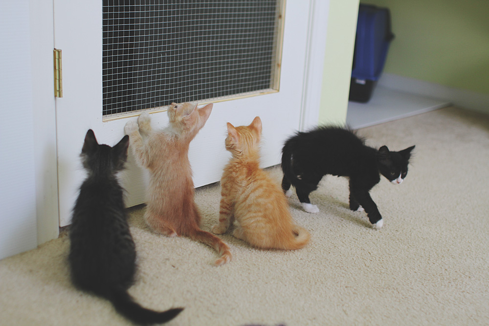 The work desk and door renovations were the only initial changes and these lasted us through several litters of kittens last fall and winter. & Fostering Kittens part 2 of 5 \u2013 Preparing the Kitten Room \u2013 Tulip ...