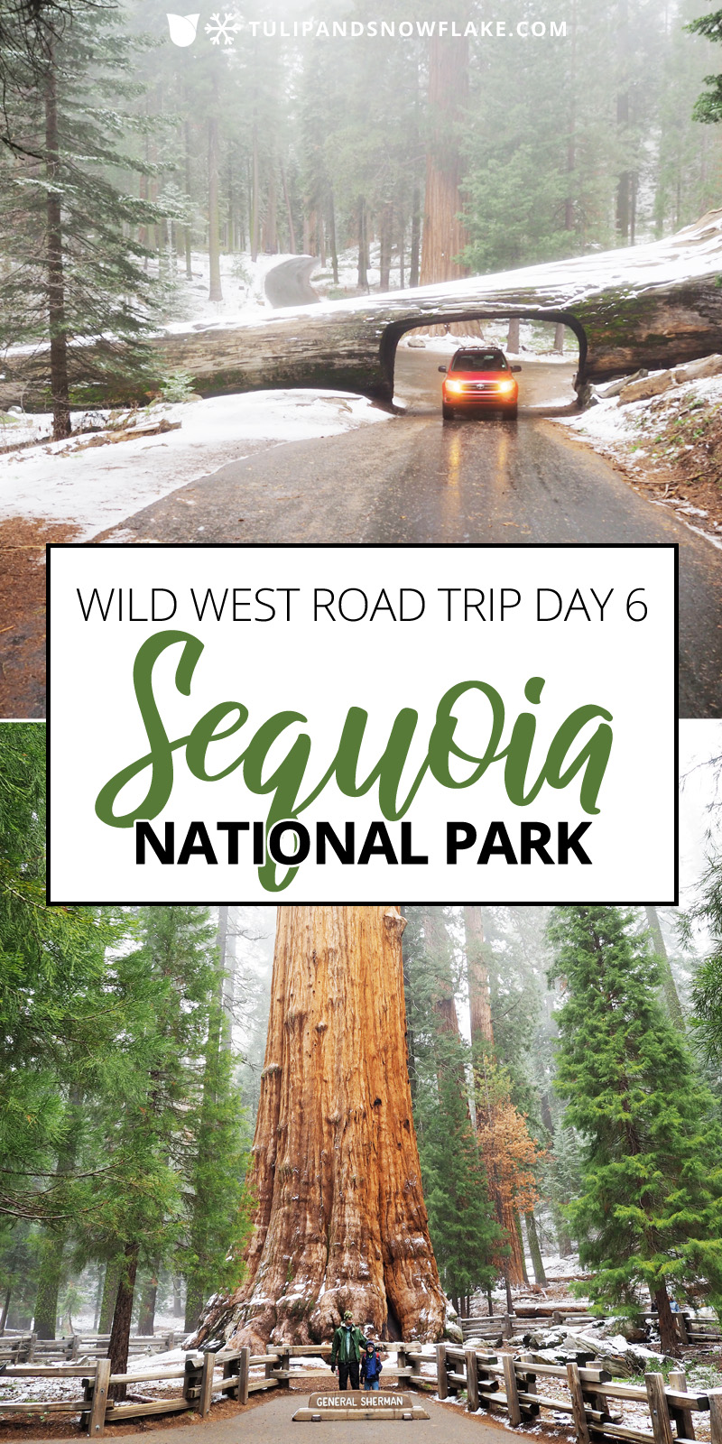 Wild West Road Trip day 6 - Sequoia National Park - Tulip and Snowflake
