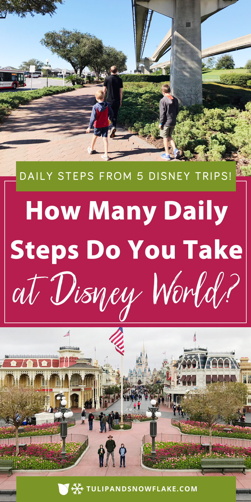 How many daily steps do you take at Disney World?