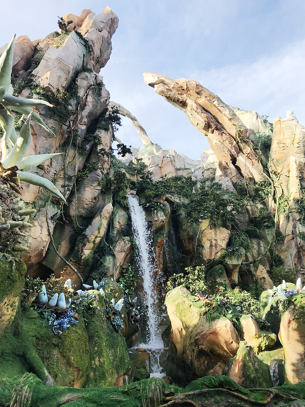 Animal Kingdom Flight of Passage rope drop