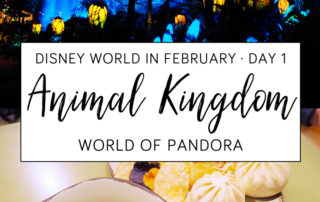 Disney World in February - Animal Kingdom