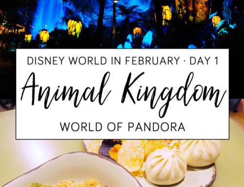 Disney World in February Day 1 / Animal Kingdom