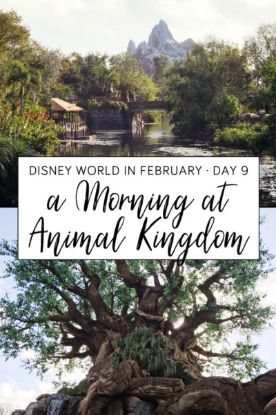 A Morning at Animal Kingdom