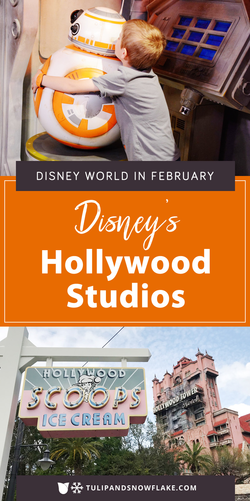 Disney's Hollywood Studios in February