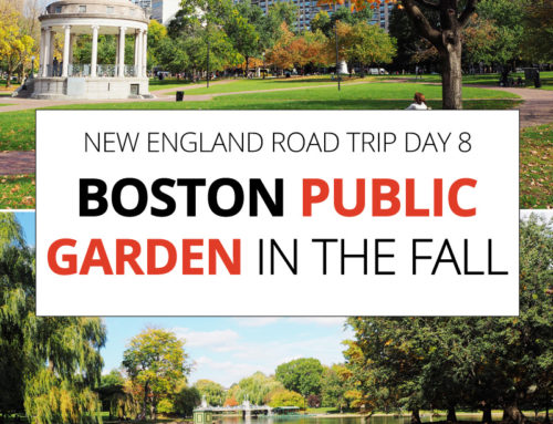 New England Road Trip day 8 – Boston Public Garden and Harvard Square