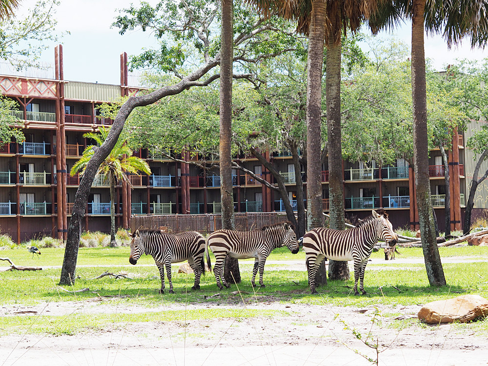 Disney's Animal Kingdom Lodge Sanaa animals
